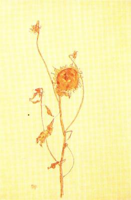 Egon Schiele: Zvadlá slunečnice, 1912