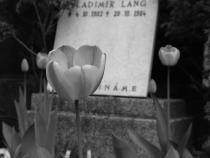 Hřbitovní kvítí