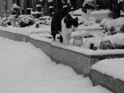 Zima přišla bosa