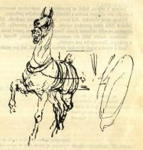 Studie koně. Kresba perem.
