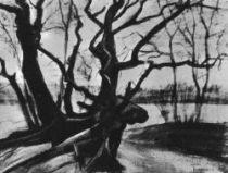 Studie stromů, Haag, Duben 1882, černá a bílá křída, černý inkoust, tužka, akvarel, 51×71, Národní muzeum Kröller-Müller, Otterlo.