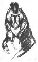 Gorila. Litografie. 1909. 26 × 14,7.