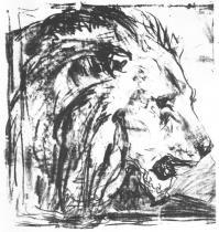 Lví hlava. Litografie. 1912. 49,8 × 45,8.