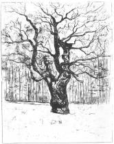 Dub. Lept. 1903. 64,2 × 49,6.